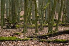 Naturlig skog Arkivbilder