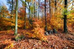 Naturlig skog i hösten, nedgång Royaltyfri Foto