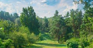 Naturlig skog med barrträds- och lövfällande träd, ängen och f Fotografering för Bildbyråer