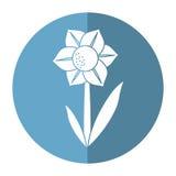 Naturlig skugga för Mona lisa blomma Arkivfoto