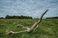 naturlig skulptur Arkivbilder