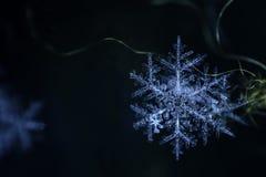 Naturlig snöflinganärbild Vinter förkylning Jul royaltyfria bilder