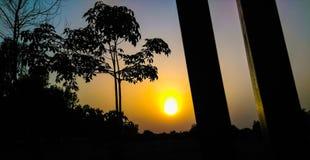 Naturlig solnedgångträdkontur royaltyfri fotografi