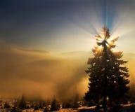 Naturlig solstjärnajulgran royaltyfria foton