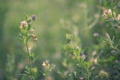 naturlig sommar för bakgrund Royaltyfri Foto
