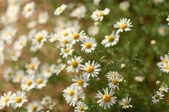 naturlig sommar för bakgrund Arkivfoton