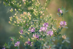 naturlig sommar för bakgrund fotografering för bildbyråer