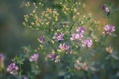 naturlig sommar för bakgrund royaltyfri fotografi