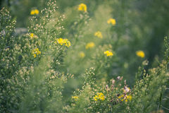 naturlig sommar för bakgrund royaltyfria foton