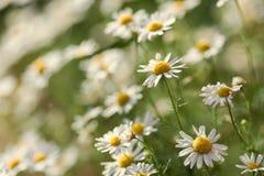 naturlig sommar för bakgrund arkivbild