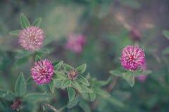 naturlig sommar för bakgrund arkivfoto