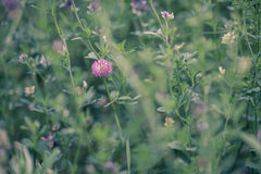 naturlig sommar för bakgrund royaltyfria bilder