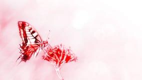 naturlig sommar för bakgrund Röd fjäril på röda blommor arkivfoton