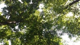 naturlig sommarwallpaper för abstrakt morgon Fotografering för Bildbyråer