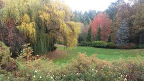 naturlig spruce sunbeamsskogsmark Royaltyfri Foto