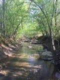 Naturlig ström i skog arkivbilder