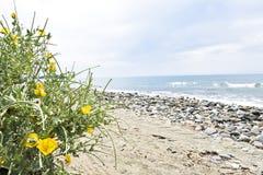 Naturlig strand med gula blommor, Estepona, Andalusia, Spanien royaltyfria foton