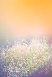 Naturlig suddig bakgrund av rosa färger blommar på orange bakgrund Royaltyfria Foton