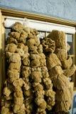 Naturlig svamp arkivbilder