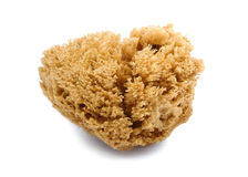 Naturlig svamp Arkivfoton