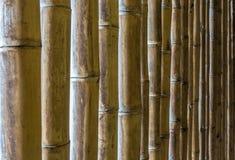 Naturlig textur av bambupinnar royaltyfria foton