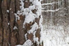 Naturlig textur av det vita snö-täckte skället arkivfoto