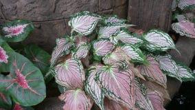 Naturlig textur av flerfärgat Fotografering för Bildbyråer