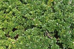 naturlig textur för abstrakt leaf för bakgrundscloseupgreen Bakgrund royaltyfri foto