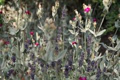 naturlig textur för abstrakt leaf för bakgrundscloseupgreen Bakgrund royaltyfria foton