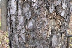 naturlig textur för bakgrundsskäll royaltyfria foton