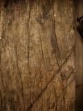 naturlig textur för bakgrundsskäll Royaltyfria Bilder