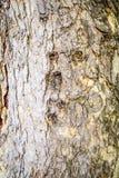 naturlig textur för bakgrundsskäll Royaltyfri Bild