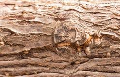 naturlig textur för bakgrundsskäll Royaltyfri Foto
