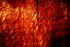 naturlig textur för exuviae Arkivbild