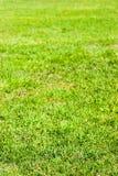 Naturlig textur för fält för grönt gräs i ljust solljus Royaltyfri Foto