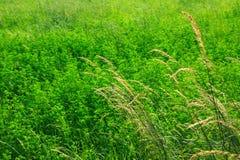 naturlig textur för gräs Royaltyfria Bilder