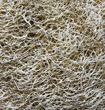 Naturlig texturluffasvamp Royaltyfria Bilder