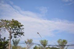 Naturlig tree Fotografering för Bildbyråer