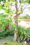 Naturlig tree Arkivfoto