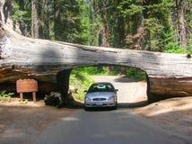 naturlig tunnel Arkivfoto