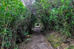 Naturlig tunnel i Abel Tasman National Park, Nya Zeeland Royaltyfria Bilder