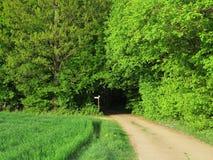 Naturlig tunnel in i skog Fotografering för Bildbyråer