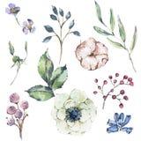 Naturlig uppsättning för vattenfärg av anemonen, vildblommor, bomull vektor illustrationer