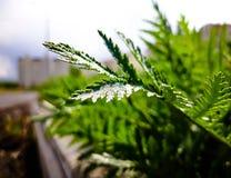 Naturlig växt i den öppna luften, i staden som är ensam fotografering för bildbyråer