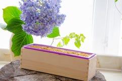 Naturlig växt- tvål för hemlagad calendula Royaltyfria Foton