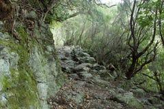 Naturlig vandringsled arkivbilder