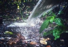 naturlig vattenspringbrunn i trädgård royaltyfria foton