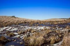 Naturlig vegetation av Campos de Vacaria - Brasilien Fotografering för Bildbyråer