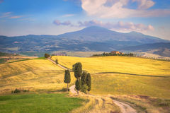 Naturlig vit lantlig väg i Tuscany, Italien Royaltyfria Foton