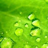 naturlig waterdrop Arkivfoto